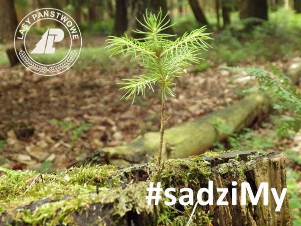 #sadzimy3.jpeg