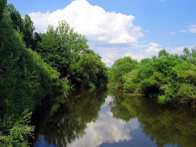 Rzeka Małapanew w okolicach Luboszyc.jpeg