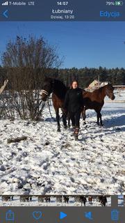 Kobieta z koniem na zaśnieżonym polu