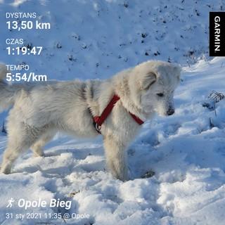 Pies na śniegu w trakcie aktywności w biegu Rusz się dla serca